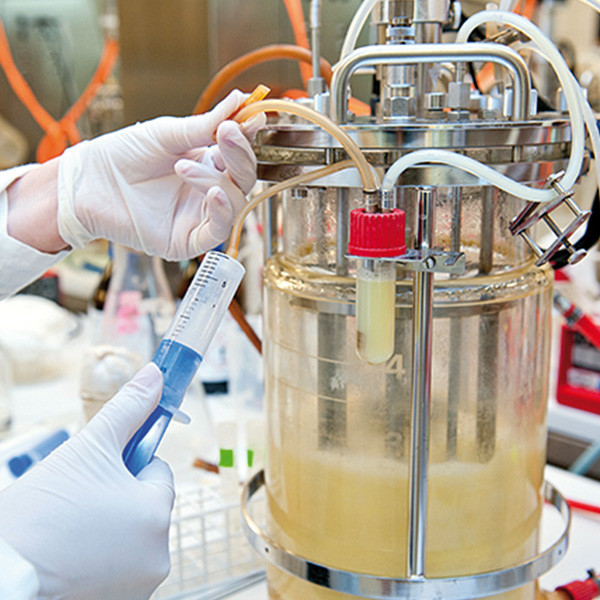New Vector for High-Level Extracellular Protein Production in Bacillus subtilis